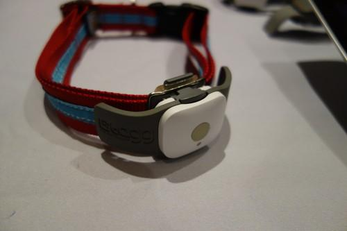 The Tagg pet tracker,