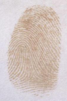 A captured fingerprint. Photo credit: UTS