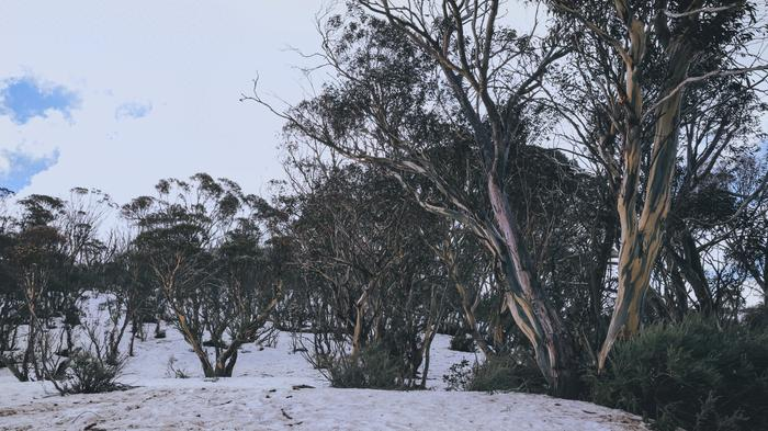 Nature, just nature - at Deadhorse Gap in the Snowy Mountains. I used the sponge tool in Photoshop to subtlety highlight the colours in the trees. 24mm, 1/800, ISO 1000, 10