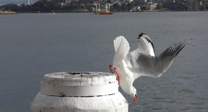 A still image taken from the seagull video we showed earlier.