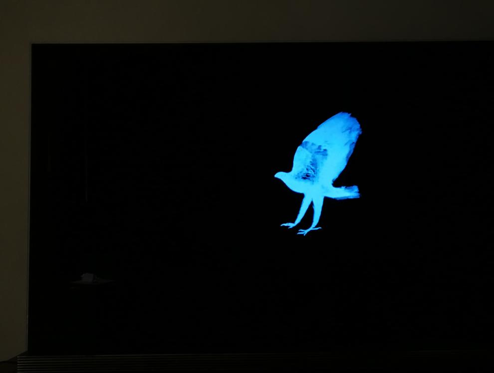 This innocuous image tells us a great deal - there's no Halo Effect light bleeding whatsoever. On many other TVs light could be glowing all around this image or even streaming in from the bottom. But OLED only lights the pixels it needs. Also notice how the screen is jet black even in a dark room.
