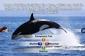 D3 Publishing Nat Geo Quiz! Wild Life